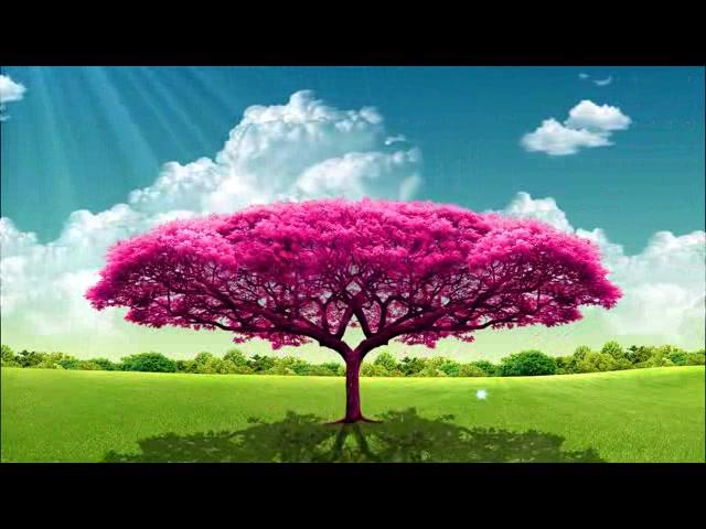 生长大树动态蝴蝶蓝天草地