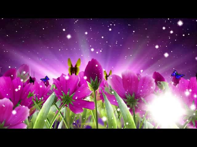唯美紫色花