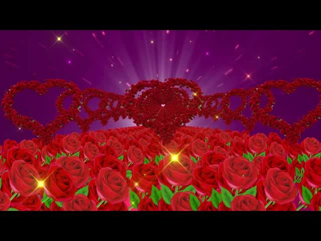 唯美玫瑰花爱心玫瑰