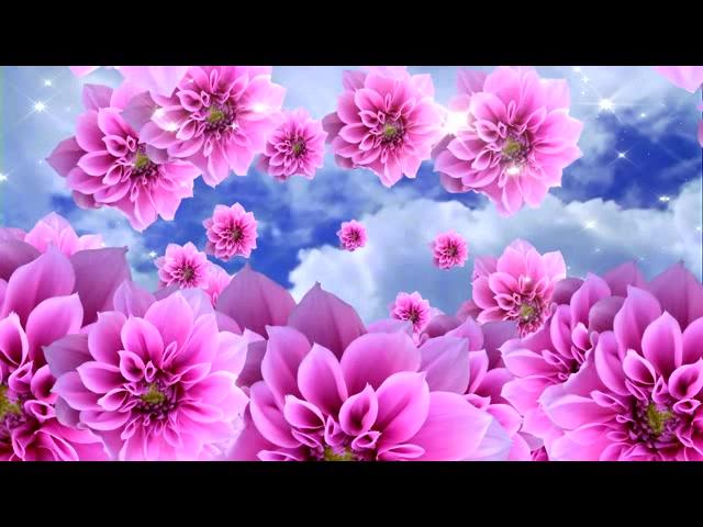 满天飞舞-粉红色花开 花海视频 LED舞台高清视频背景