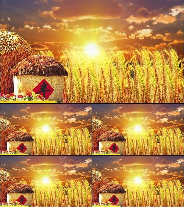 喜庆背景 丰收粮仓 麦穗 麦田 led背景视频素材金色大气 夕阳