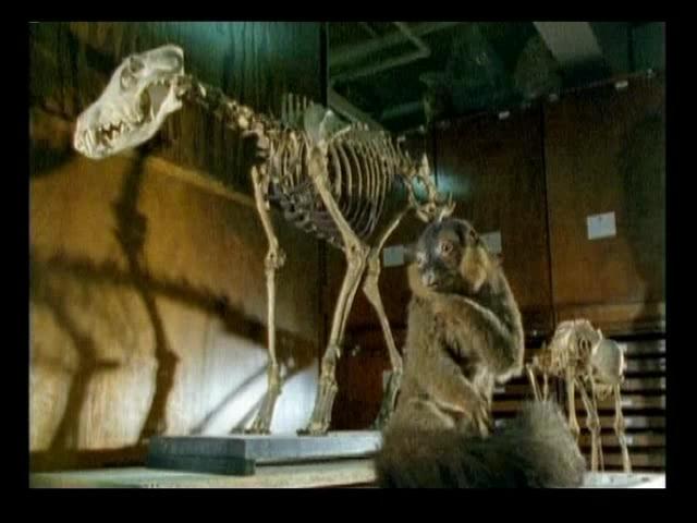 动物标本骨骼造型
