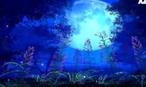 夜晚花草生长视频素材