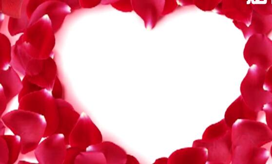 爱心花瓣视频素材