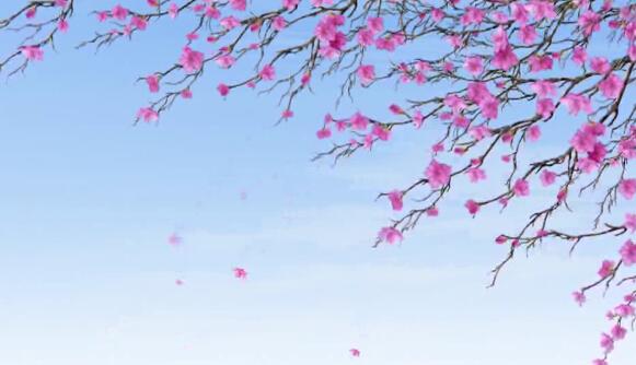 桃花落叶视频素材