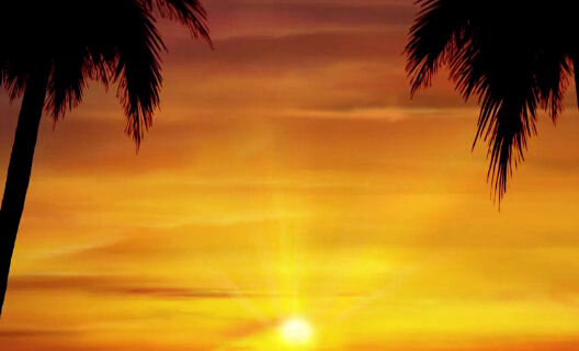 椰子树黄昏傍晚视频素材
