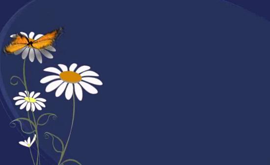 蝴蝶花朵视频素材
