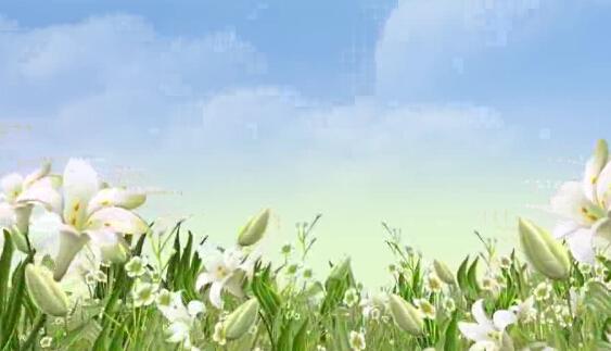 白云白颜色花朵美丽风景LED背景视频素材
