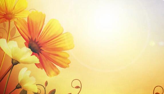 花太阳风景视频素材
