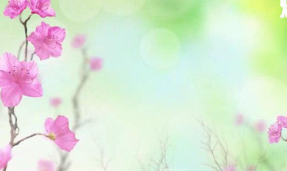 美丽花生长LED背景视频素材