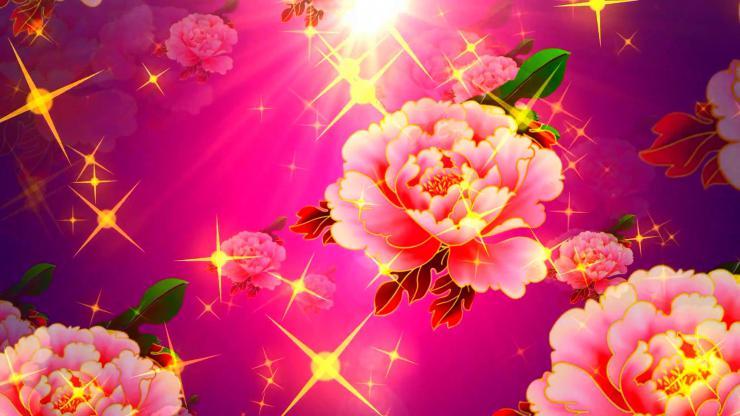 绚丽浪漫牡丹LED背景视频
