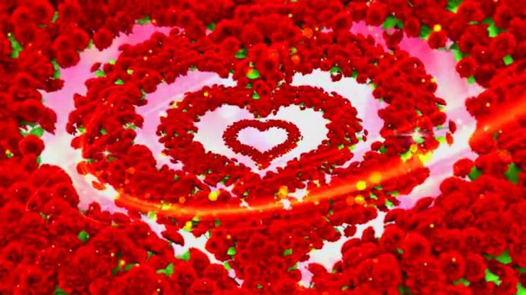 唯美爱心玫瑰花视频