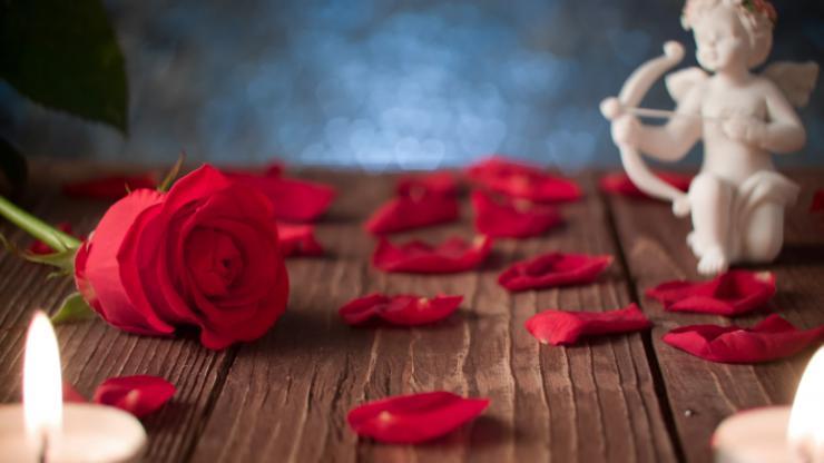 玫瑰花瓣视频