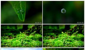 绿色树叶水滴树叶发芽生长向日葵视频素材