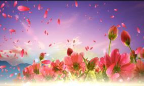 唯美紫色花彩云
