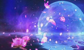 明亮月色水面莲花飘浮飞舞背景视频素材