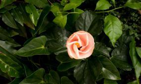 植物开花高清延时摄影视频素材