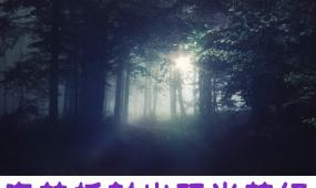 森林折射阳光梦幻美景视频