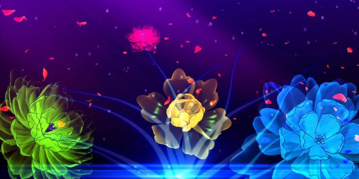 绚丽多彩的高清牡丹绽放视频背景