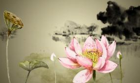 荷花 水墨 花瓣 蓮藕 飛舞 水墨畫 中國風