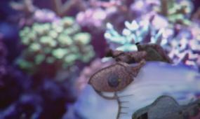 创意海底神秘生物世界