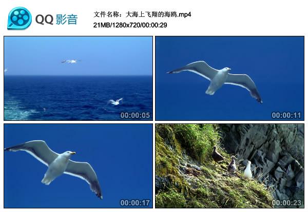 大海上空飞翔的海鸥