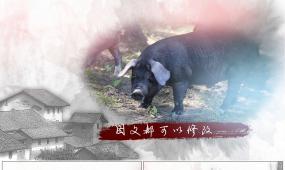 中国风水墨农牧业宣传片头免插件Ae模板