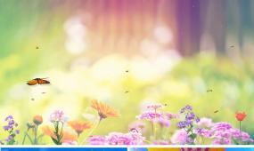 儿童舞蹈飞呀飞呀表演背景视频蝴蝶飞呀led背景