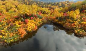 大自然秋天美丽景色视频视频素材