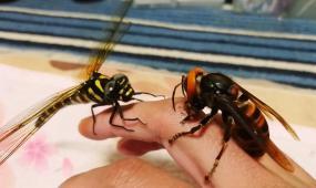 手指上的蜻蜓与黄蜂视频素材