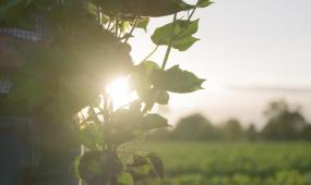 农业宣传片视频素材