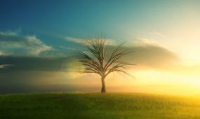 小树发芽生长成大树风景视频