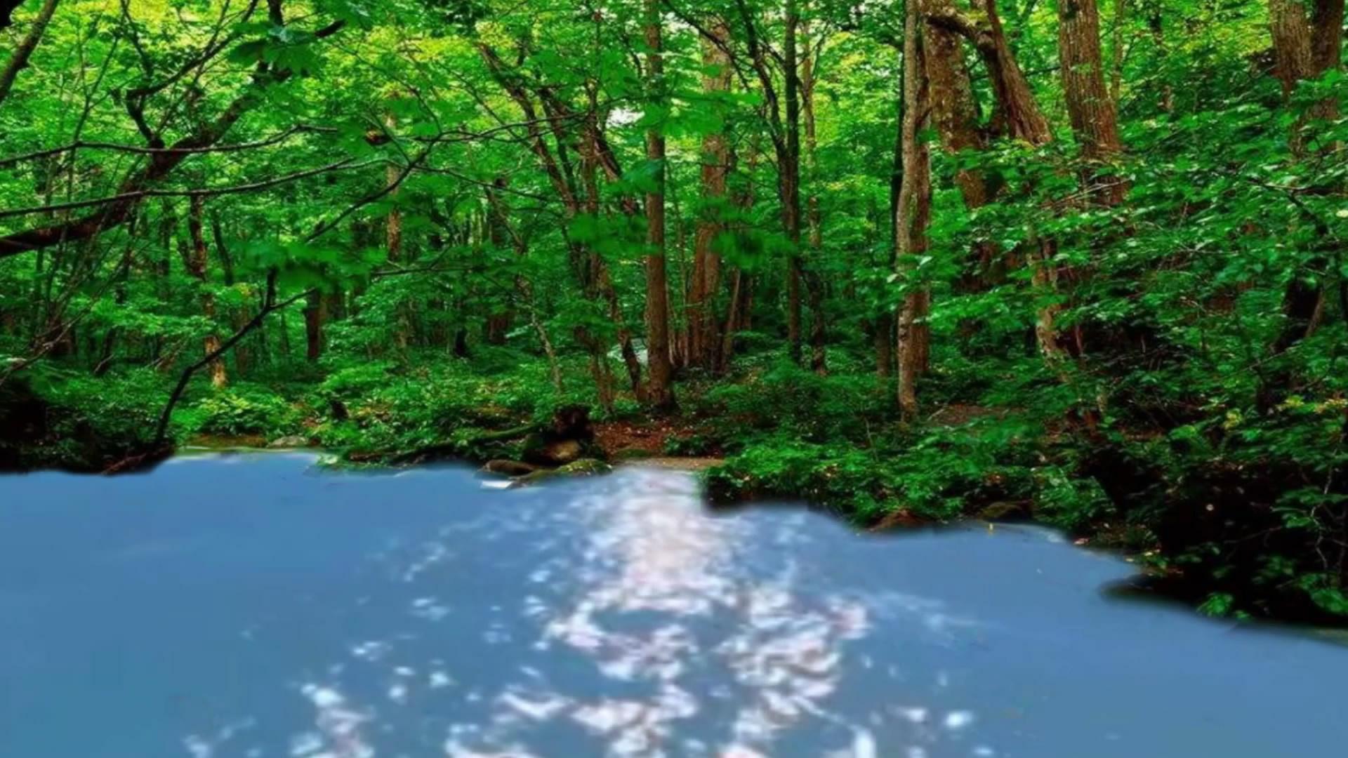 森林溪流美景